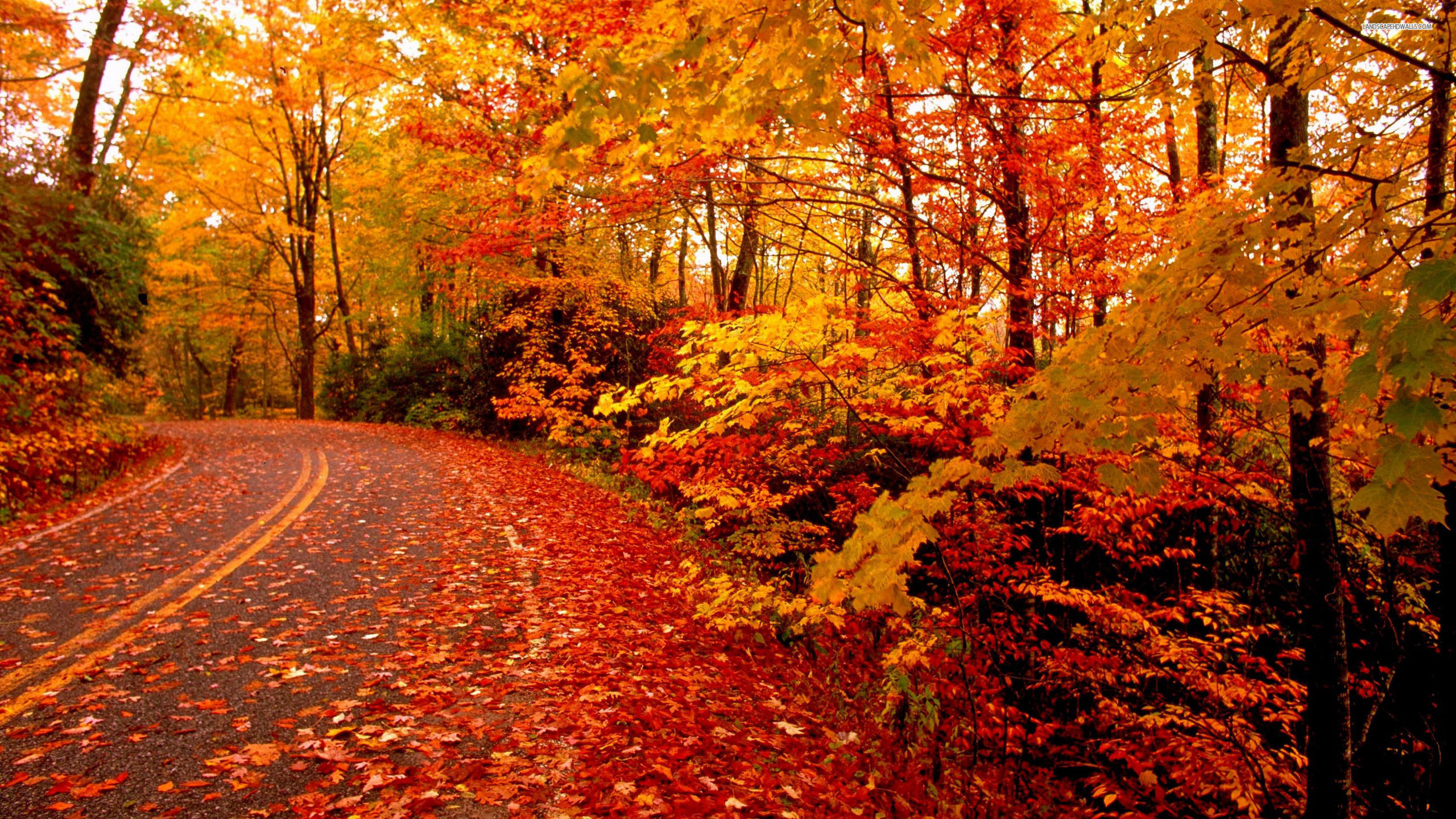 fond d'ecran gratuit sur l'automne