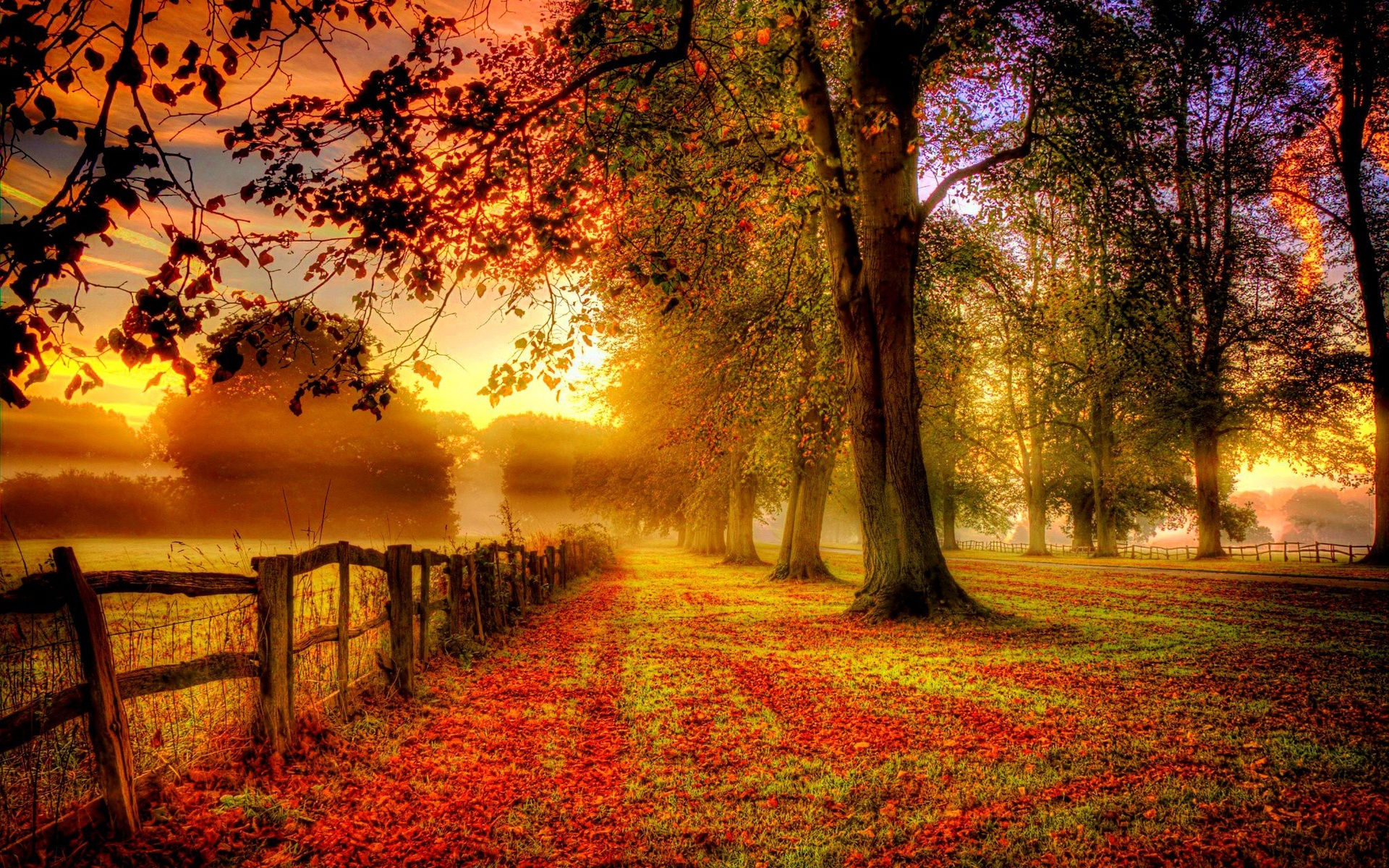 fonds-ecran-automne-feuilles-mortes-5