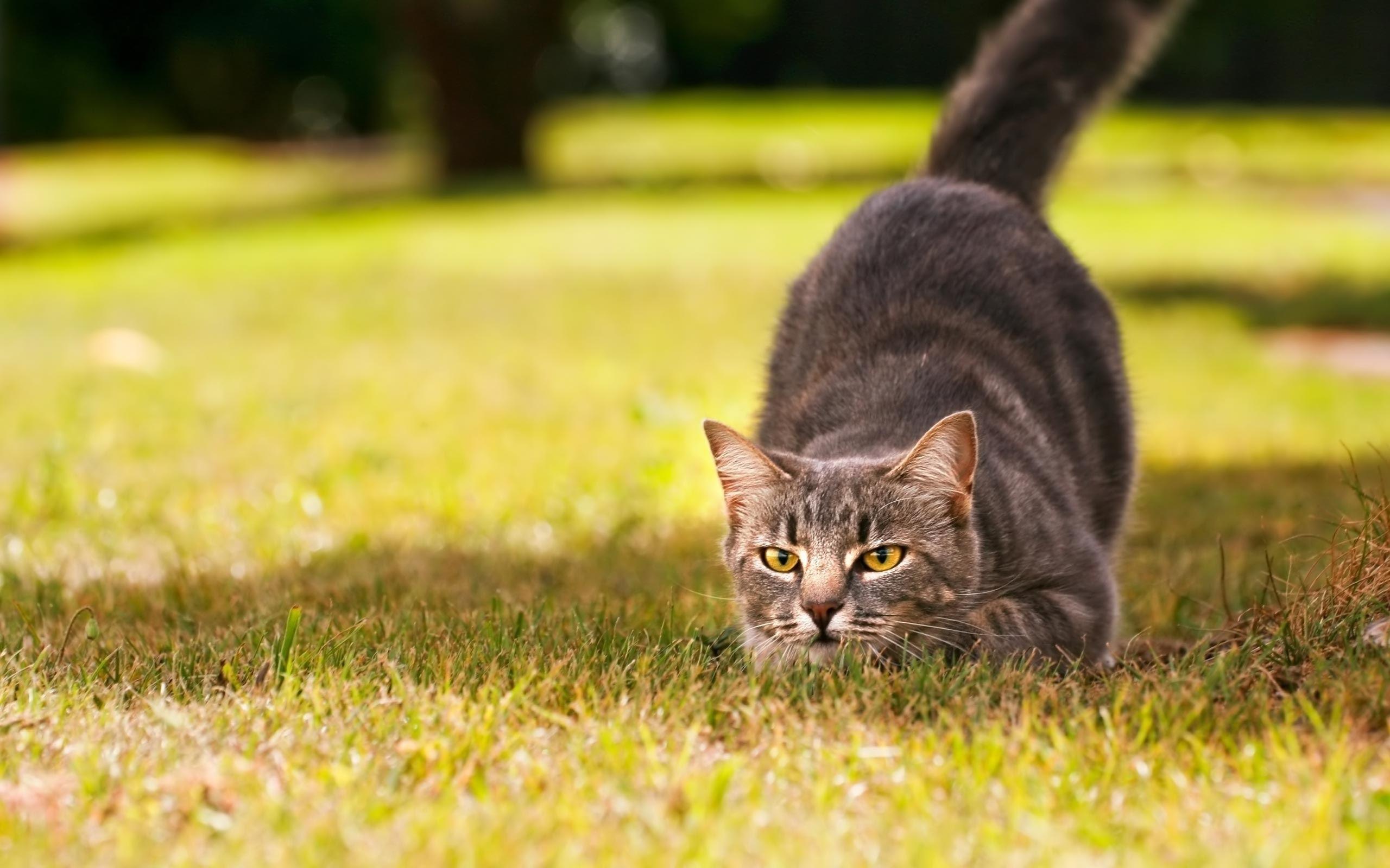 Une belle chatte rase de black donne de belles envies