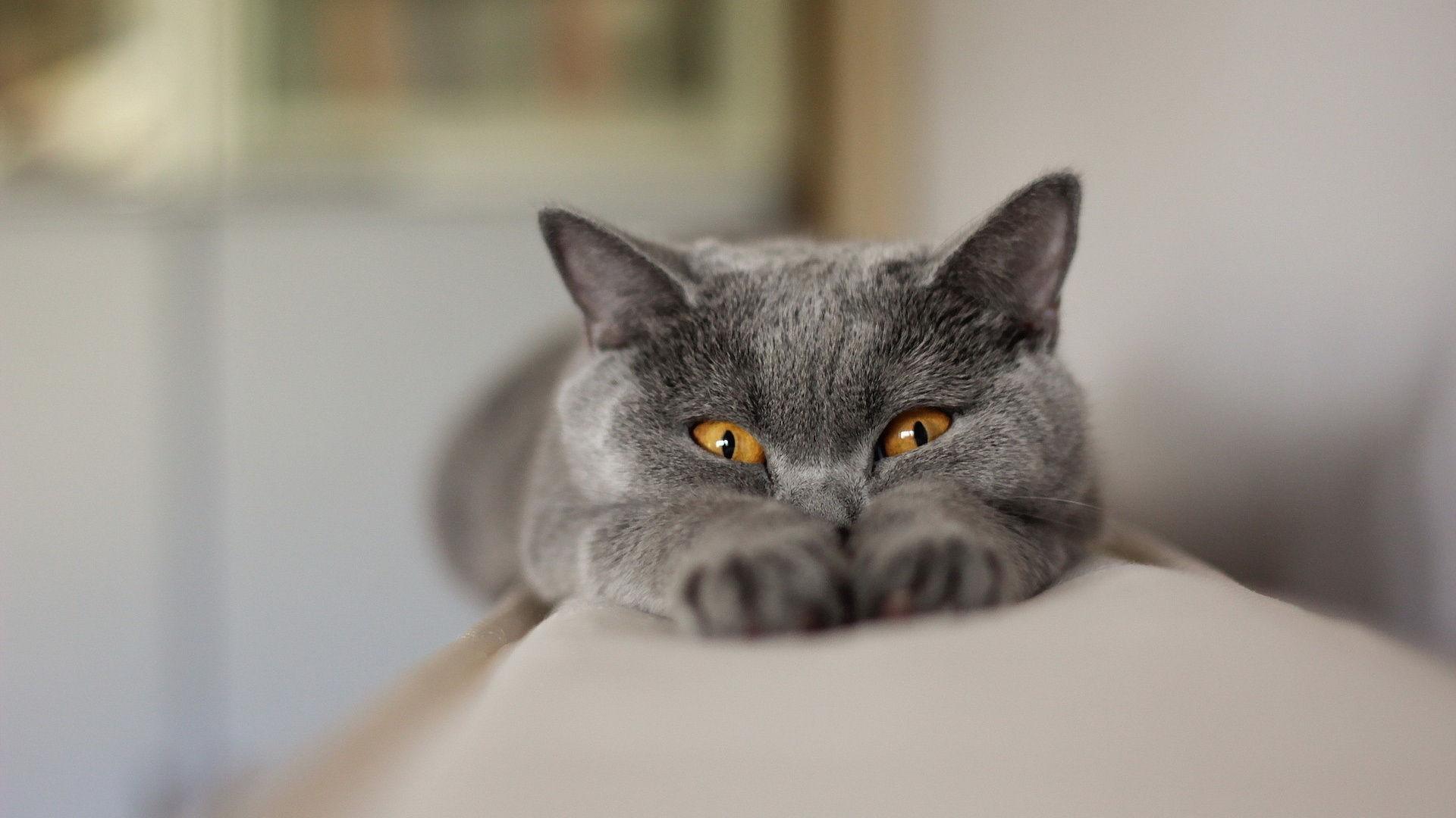 Кошки hd