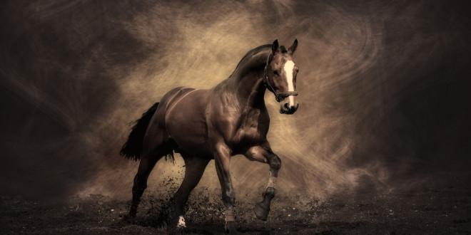 cheval wallpaper hd 1 - photo #2
