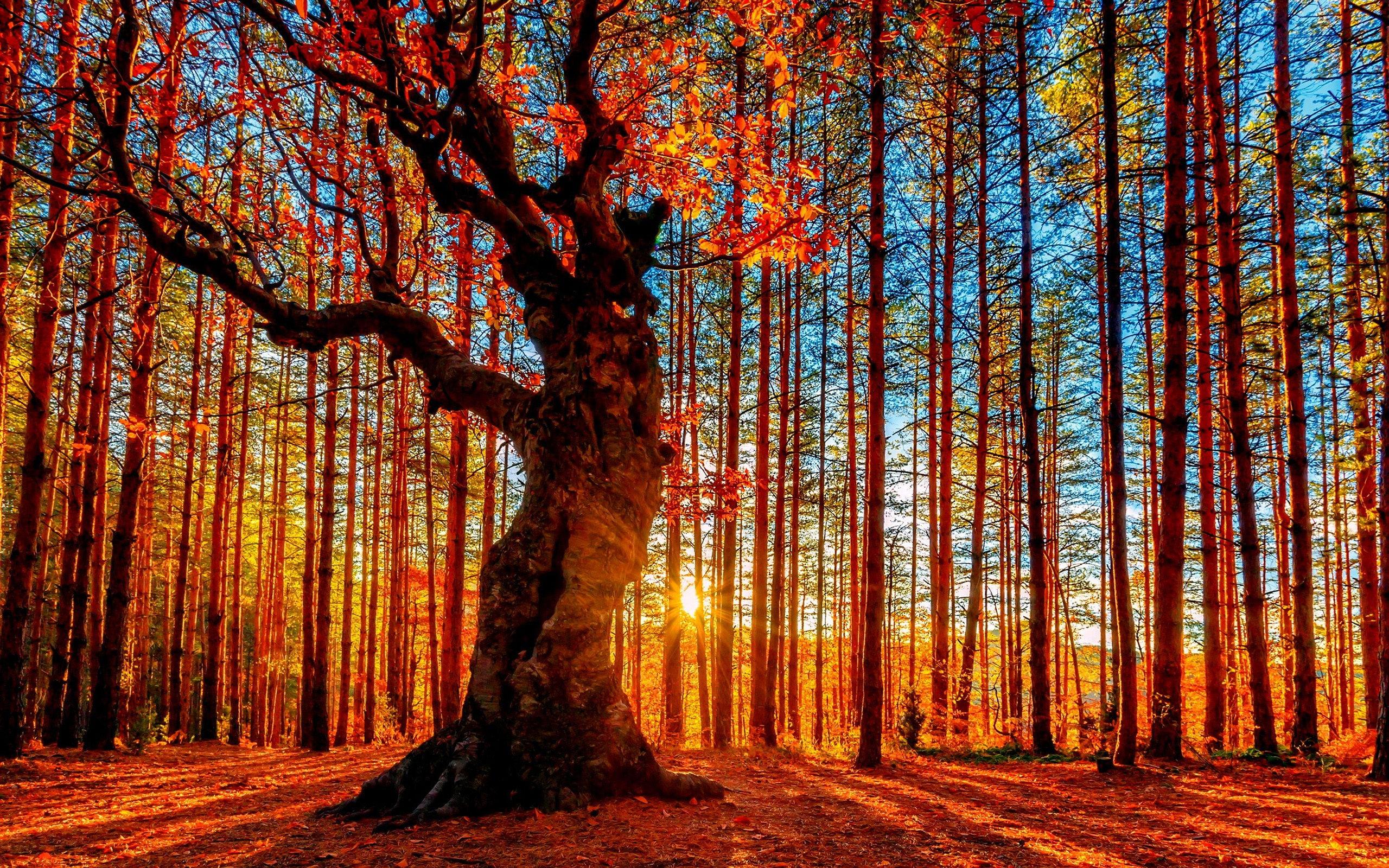 Vive la vie !!! Fonds-ecran-foret-automne-11