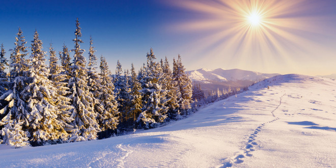 Wallpapers Foret Hiver Maximumwallhd