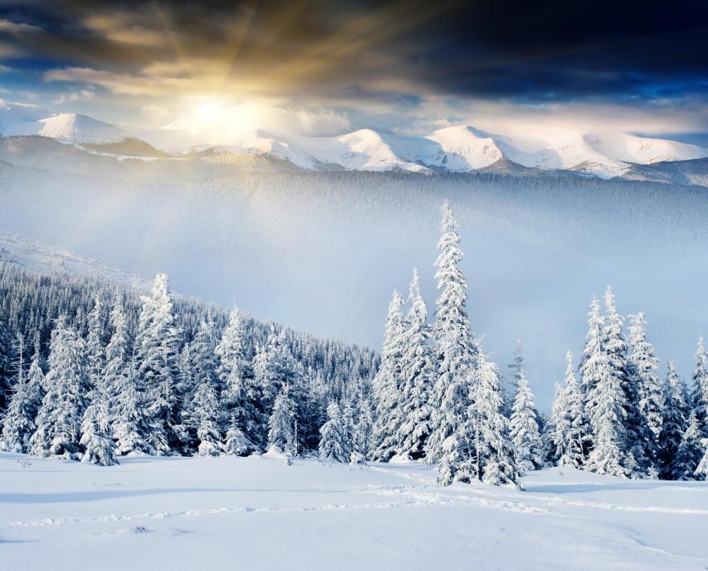 fonds-ecran-foret-hiver-16-1024x826