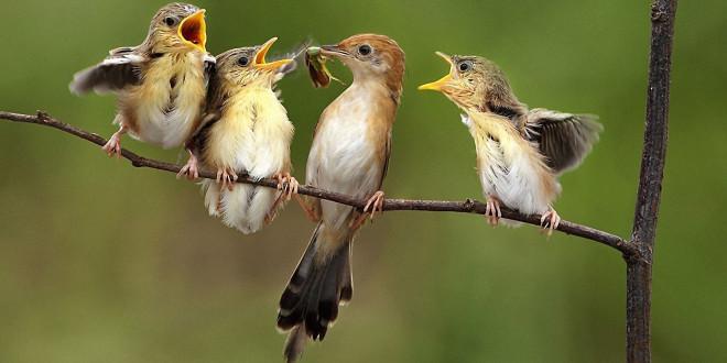Fonds D Ecran Oiseau Maximumwallhd
