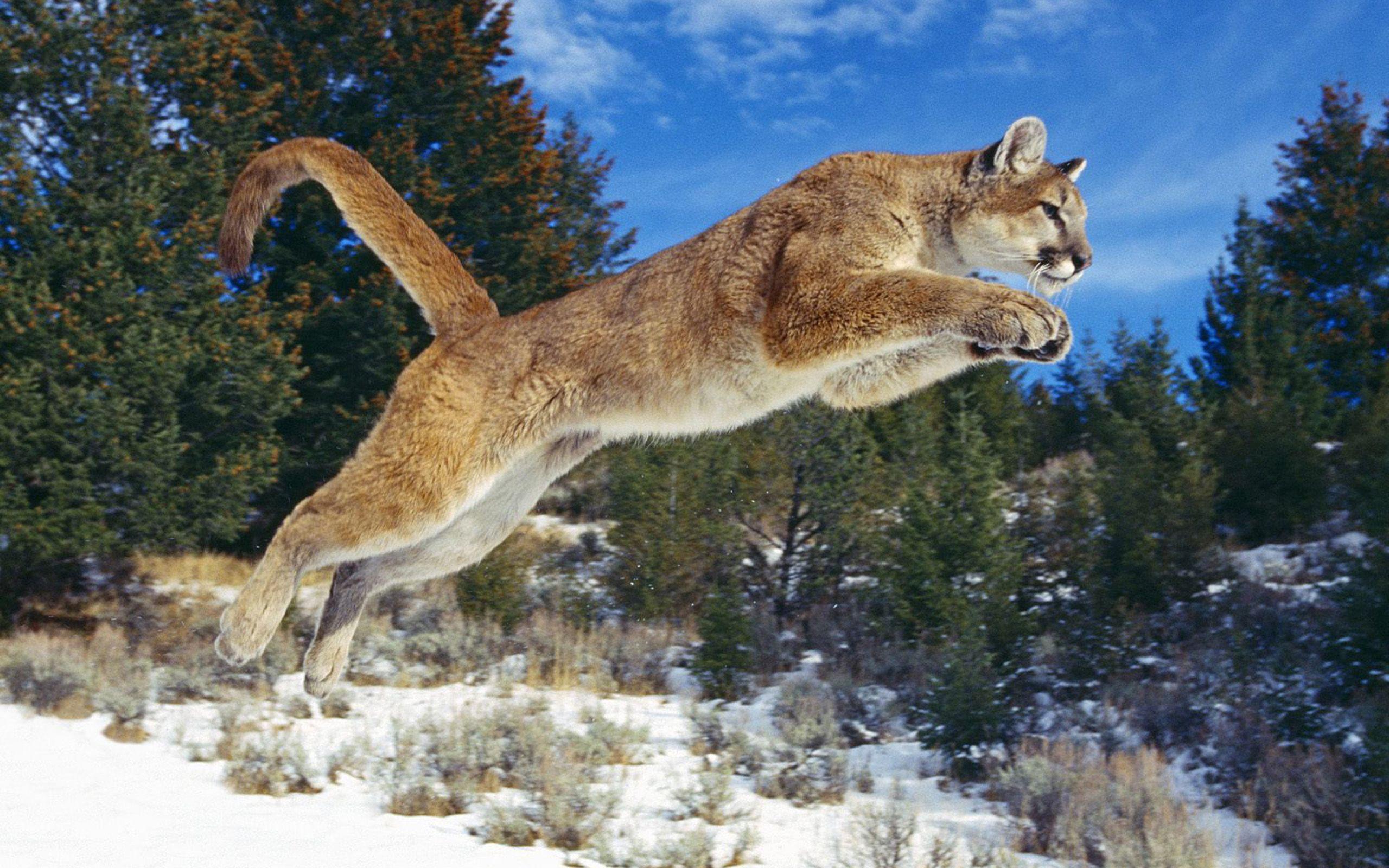 Les 30 meilleures images de Puma Wallpaper en 2019   Fonds d