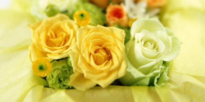 fonds-ecran-Rose-fleur-10-660x330