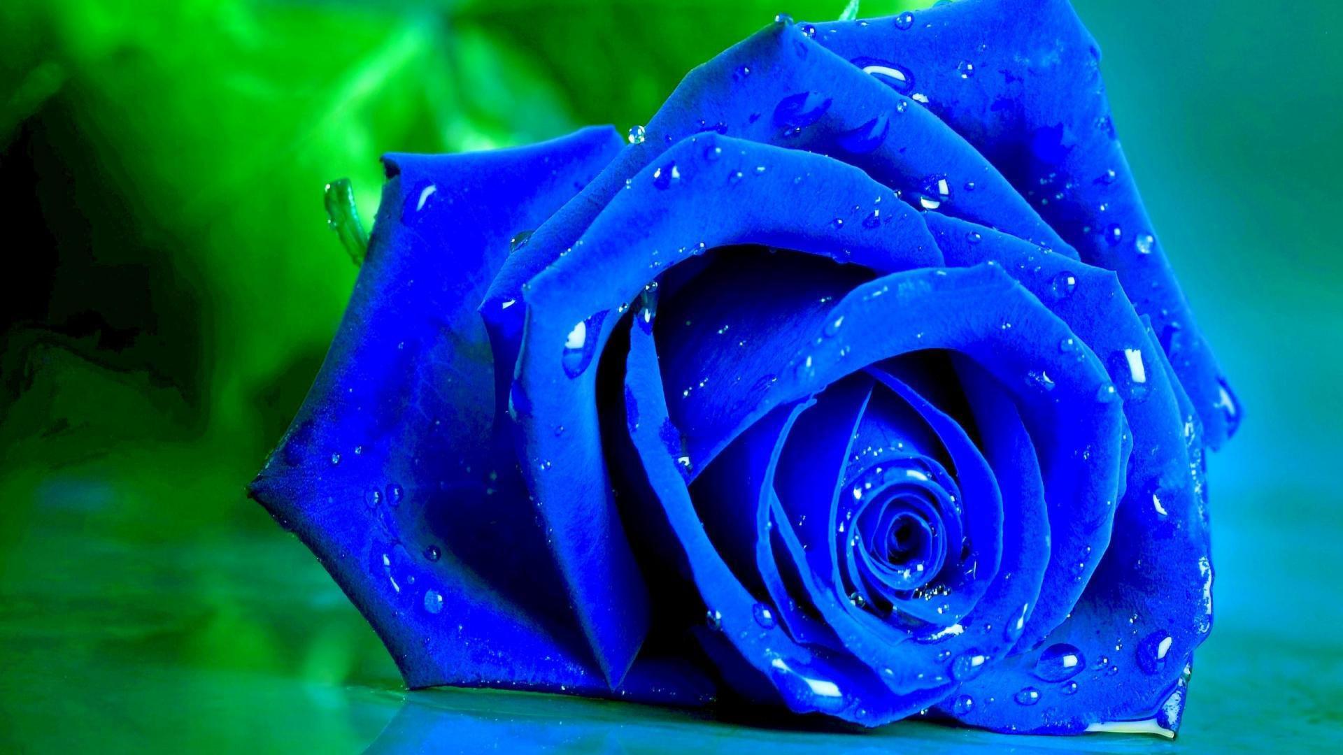 fonds d'écran rose fleur - maximumwallhd