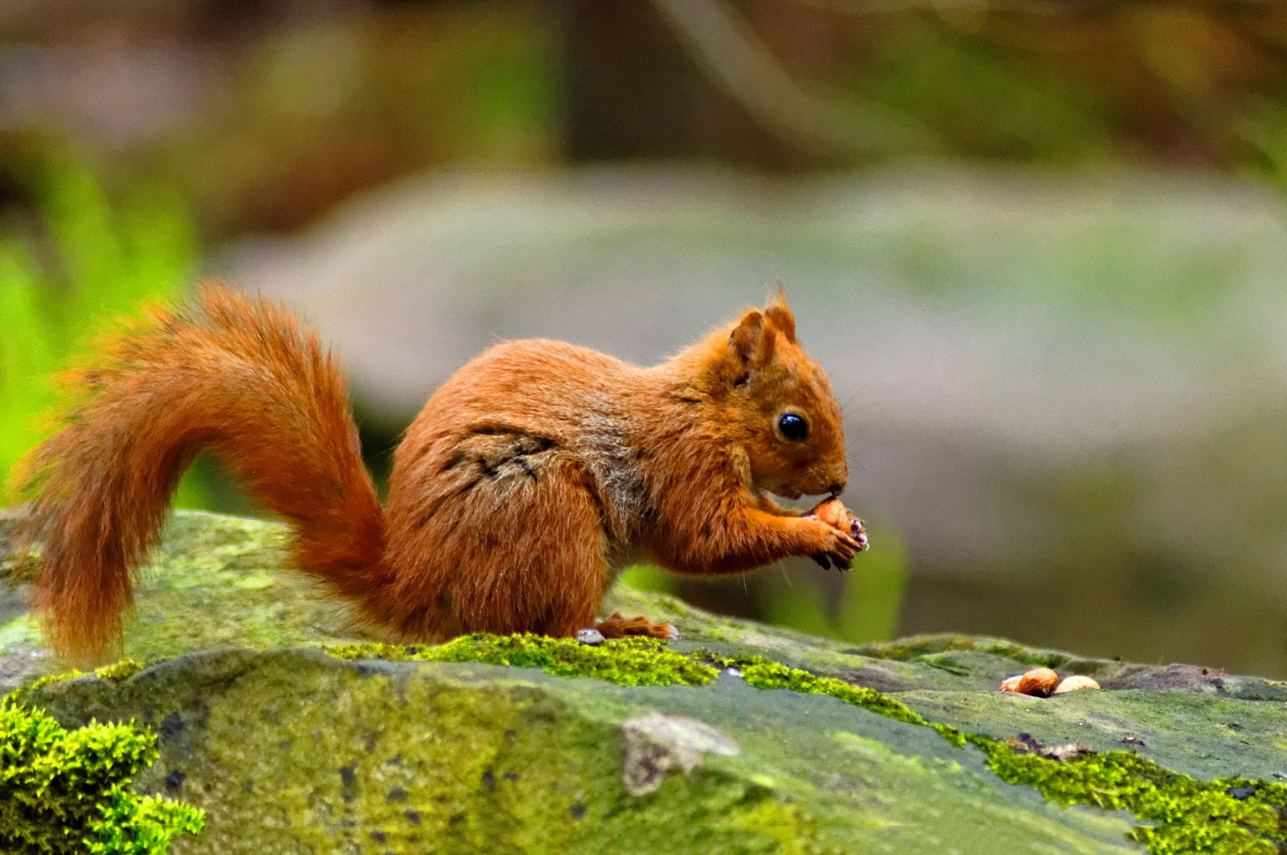 Image Result For Squirrel In Wall