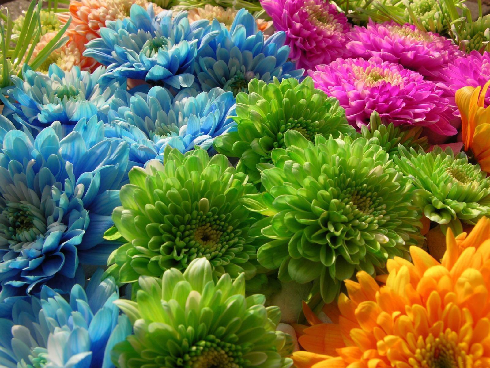 Fonds d\u0027écran Fleurs Multicolores