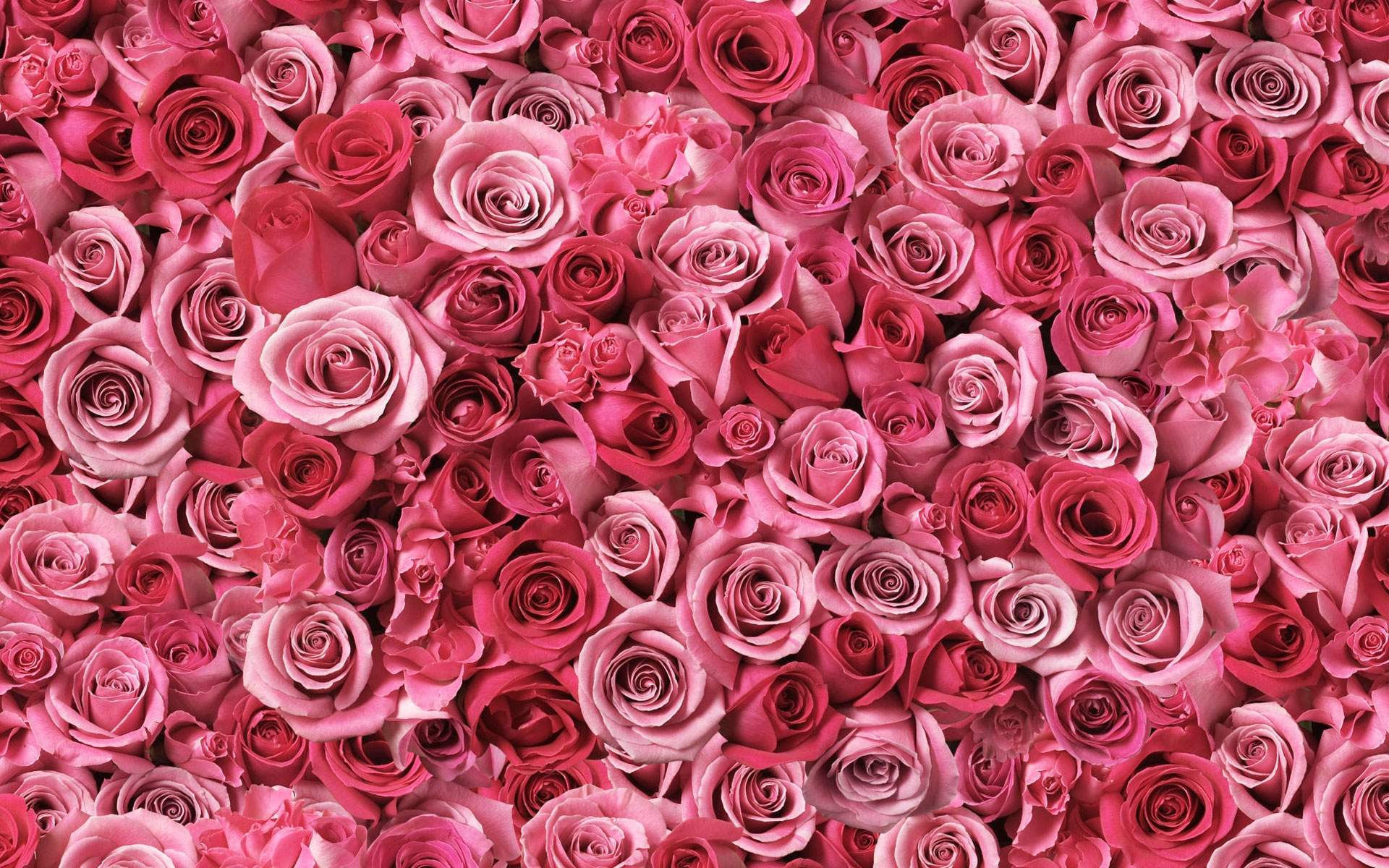 Fond Fleur Rose La Pilounette