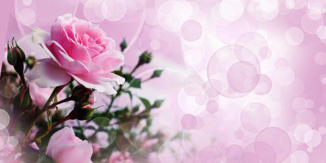 fonds d'écran fleurs - maximumwallhd
