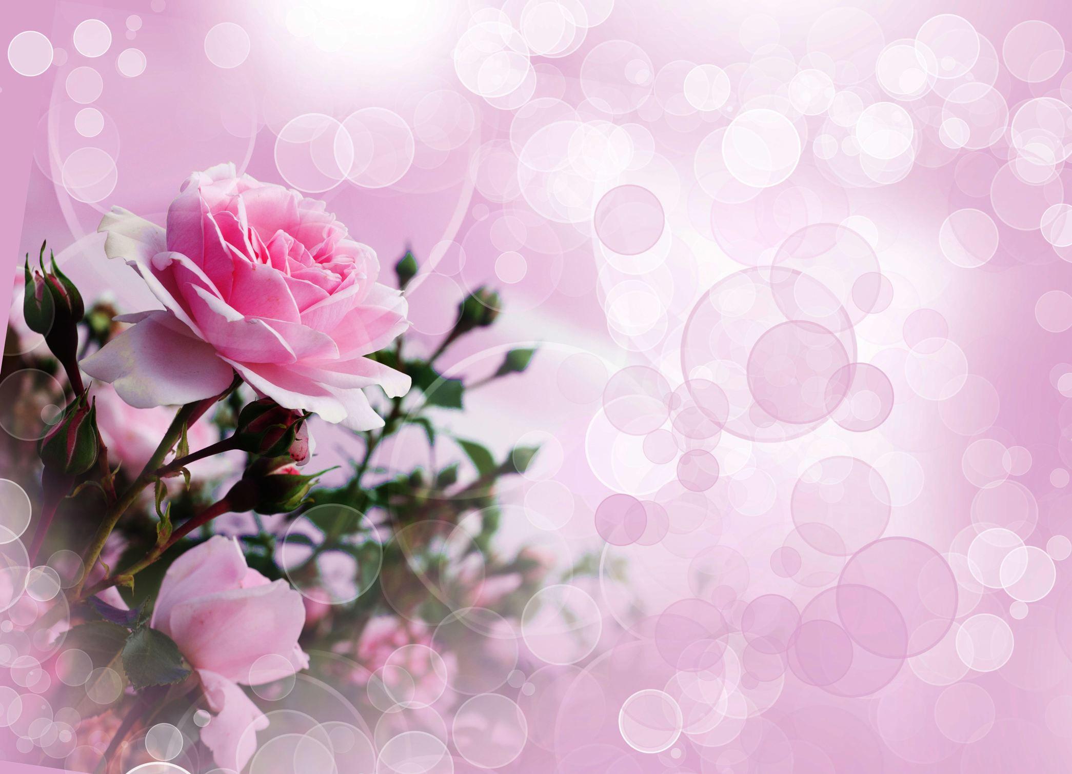 Fond Fleur Rose Collegecalvet66