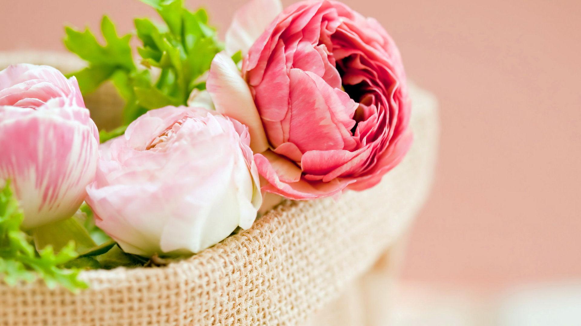 fonds d'écran fleurs roses - maximumwallhd