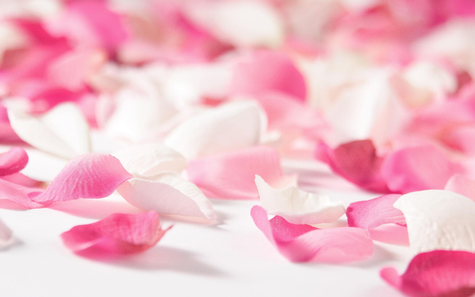 la fond fleur rose - fleuriste bulldo