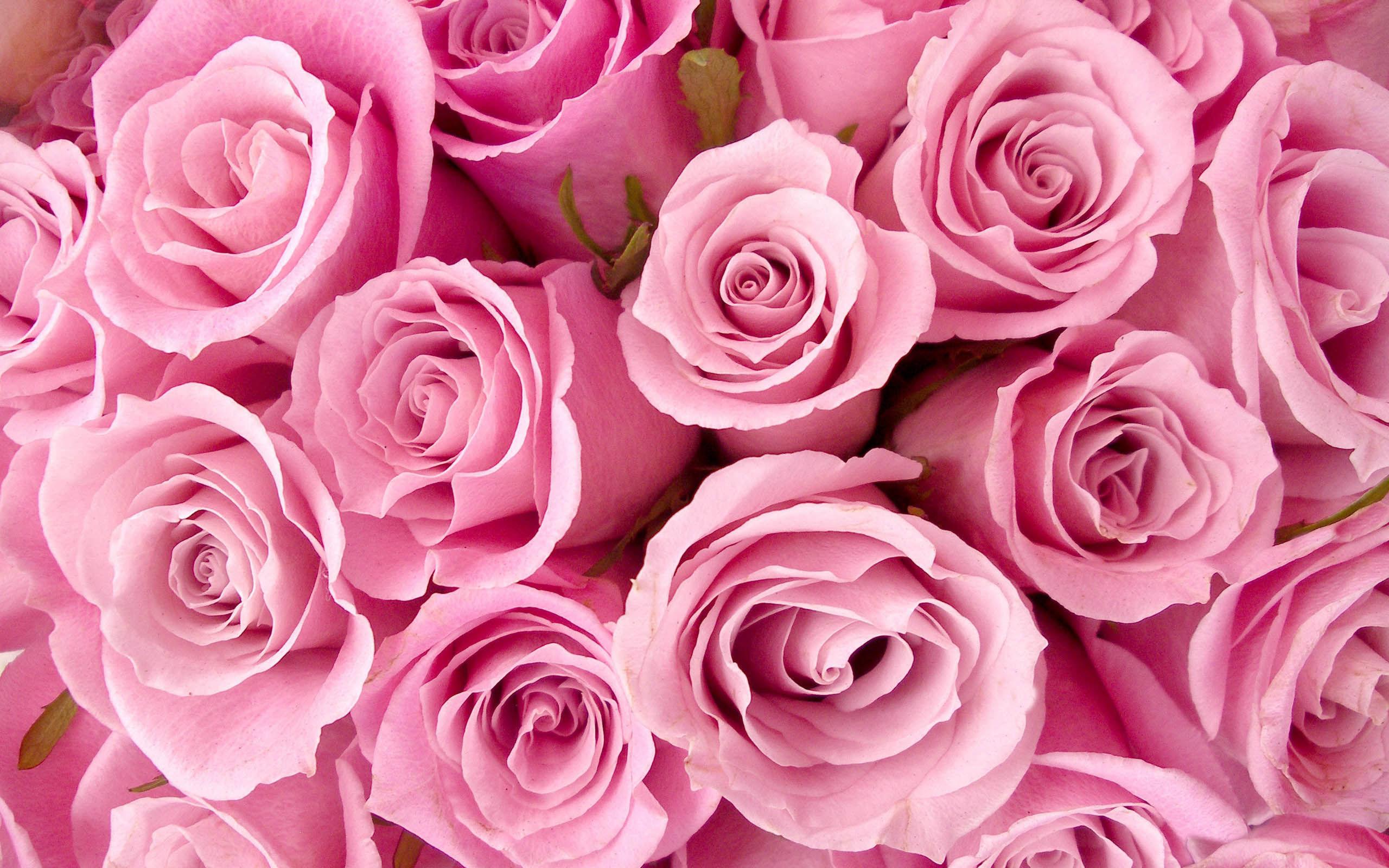 Arriere Plan Fleur Rose Idee D Image De Fleur