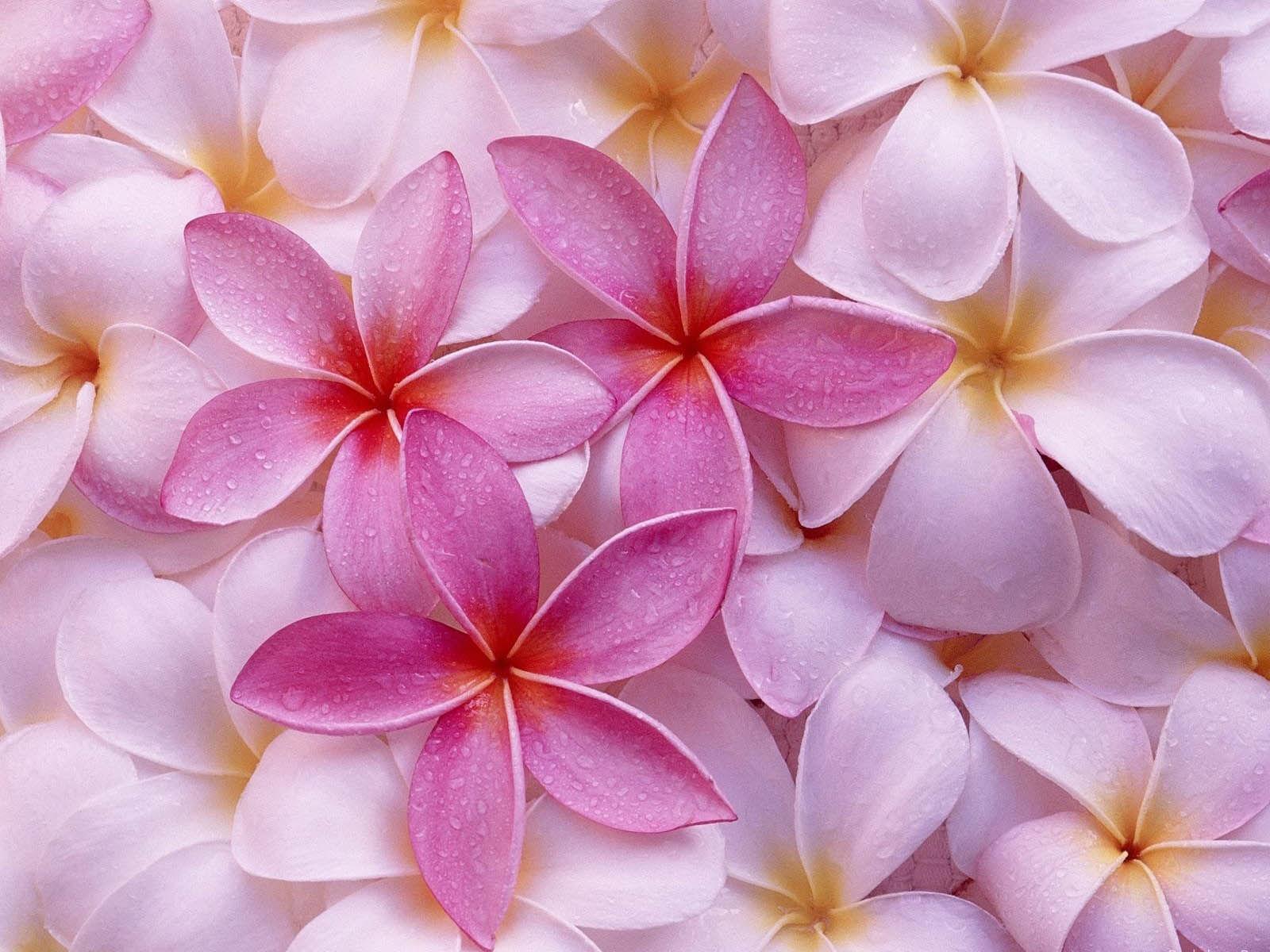 wallpaper fond ecran fleurs