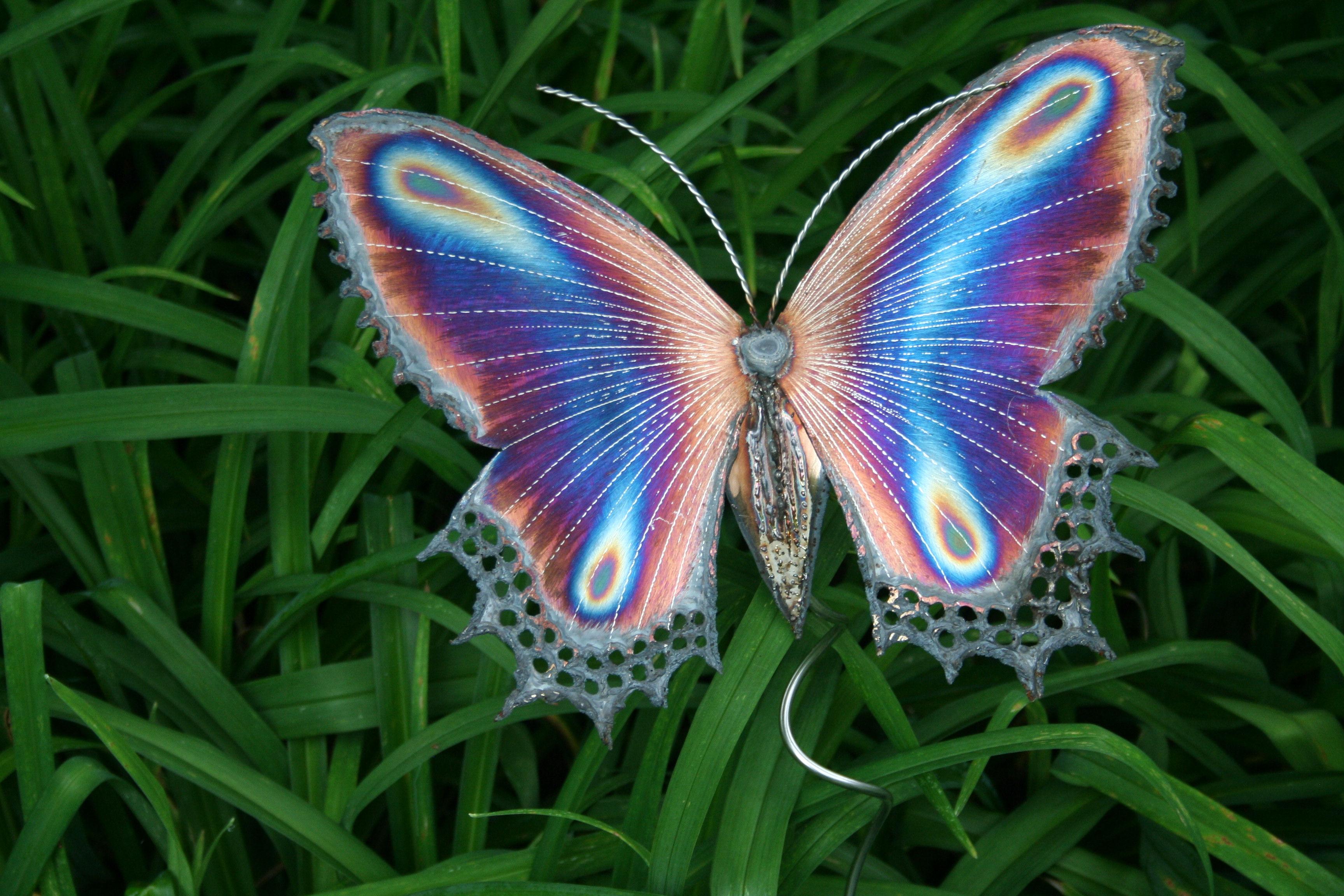 Fonds D 39 Cran Papillon Maximumwallhd
