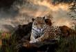 Jolie photo Animaux Sauvages Afrique