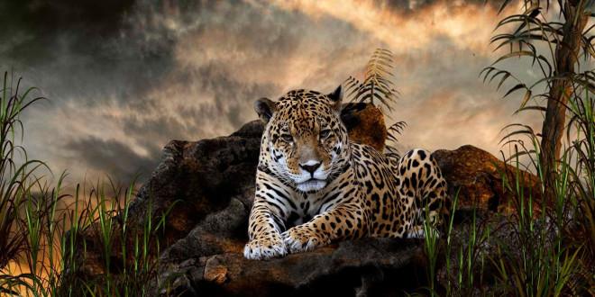 foto de Fonds d'écran Animaux Sauvages Afrique - MaximumWallHD