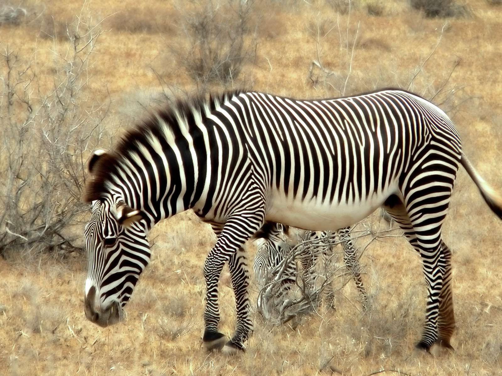 Très Fonds d'écran Animaux Sauvages Afrique - MaximumWallHD DG82