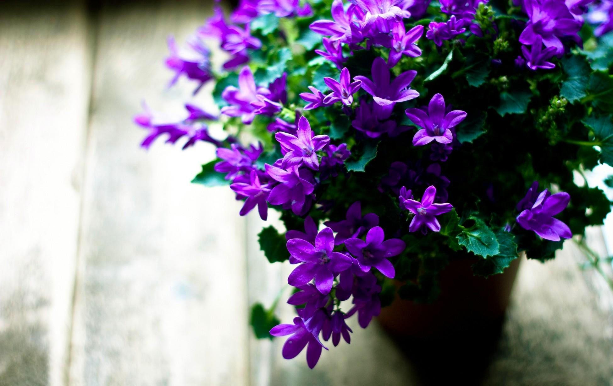 Magnifique fond décran Fleurs Magnifiques
