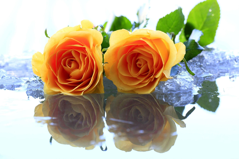 fonds d'écran fleurs magnifiques - maximumwallhd