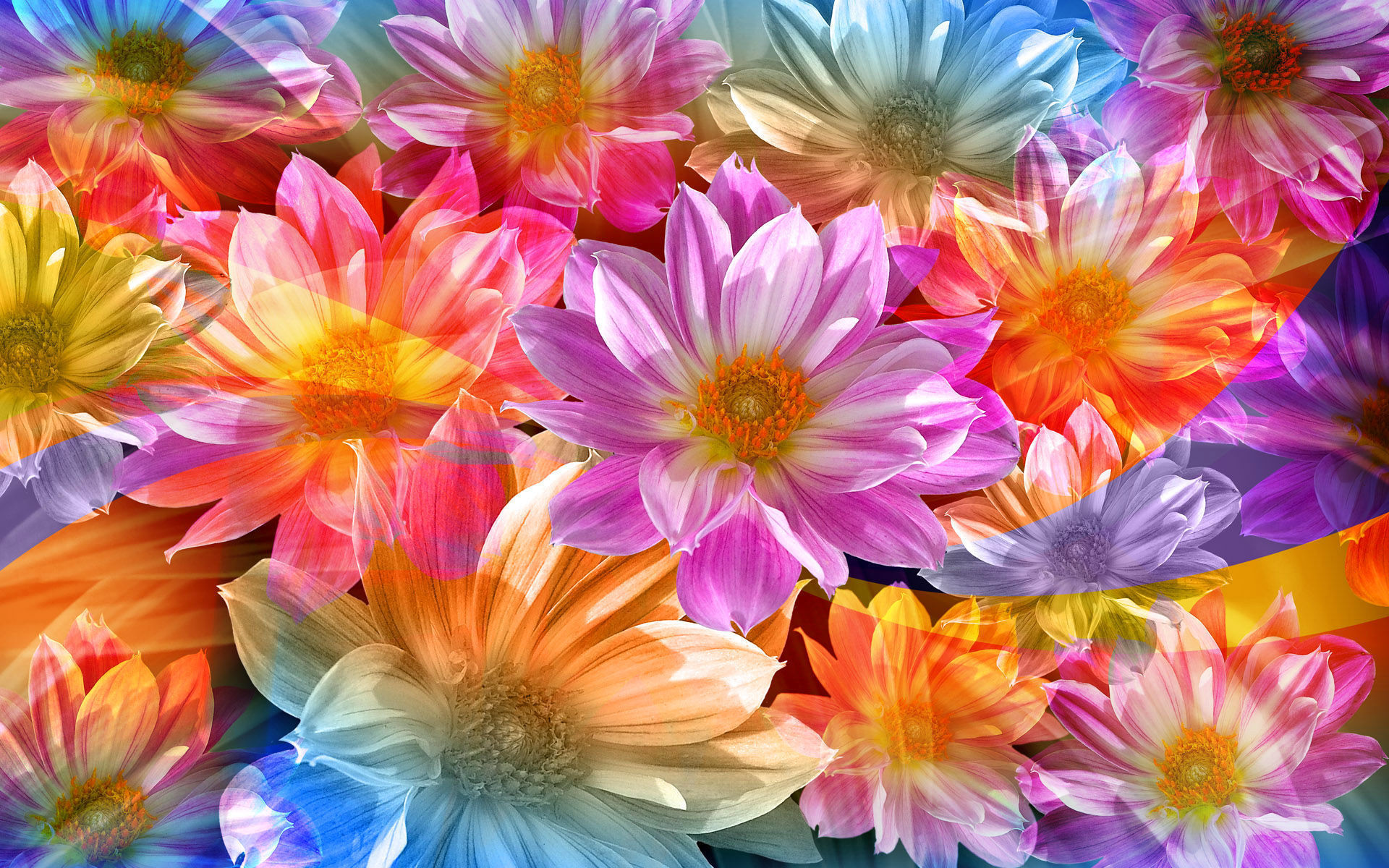 rainbow flowers wallpaper paintings - photo #11