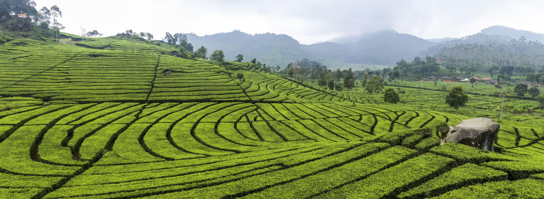 Fonds d 39 cran bandung maximumwallhd for Terracing definition in agriculture