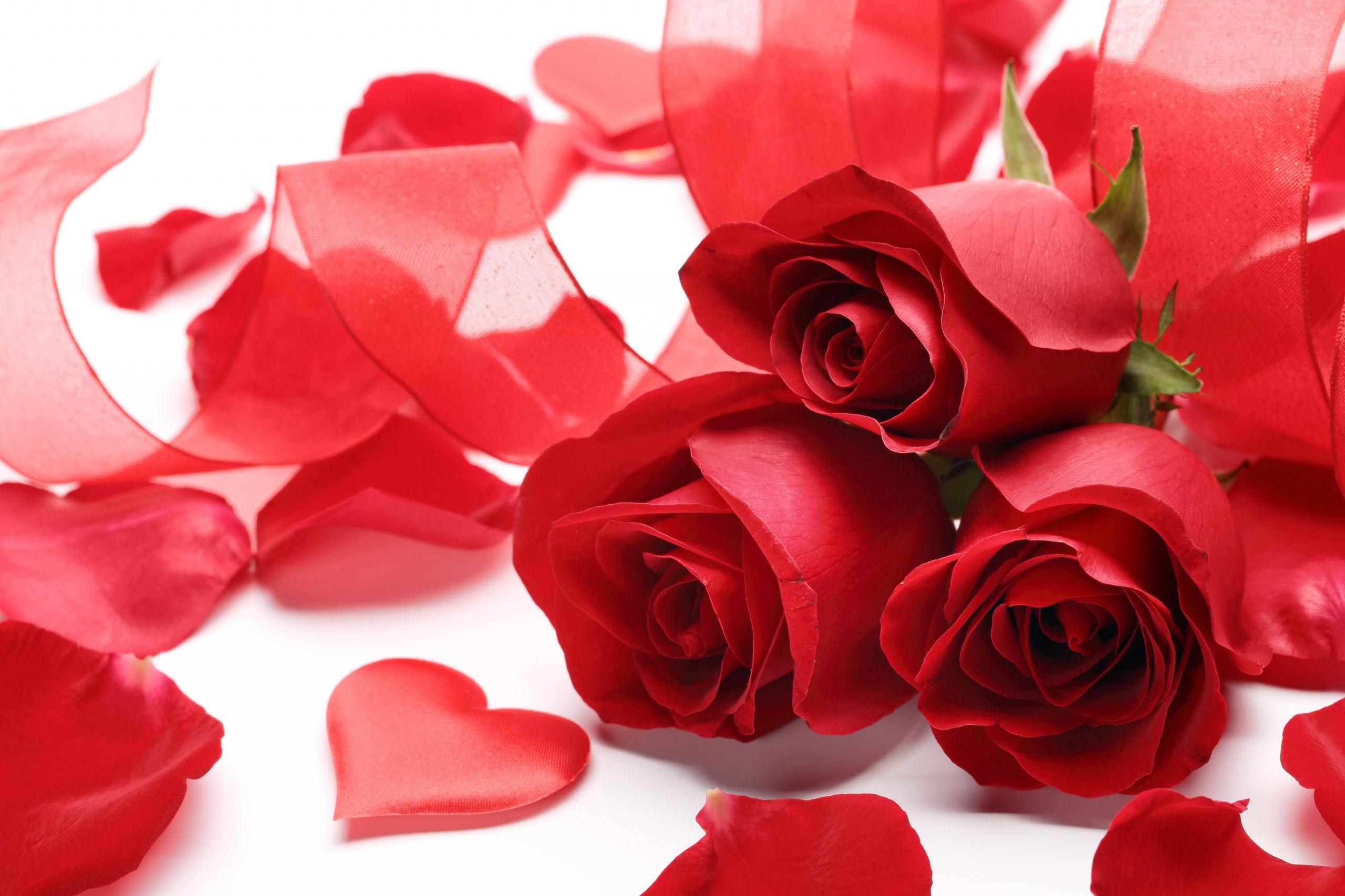 Fonds D Ecran St Valentin Fleur Rose Maximumwallhd